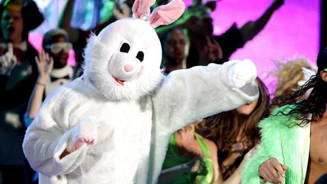 mr.bunny